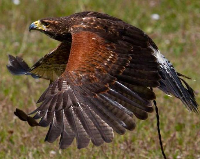 Visit the Devon Bird of Prey Centre