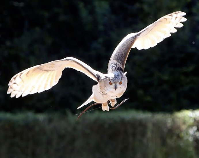 Devon Bird of Prey Center Opening Times
