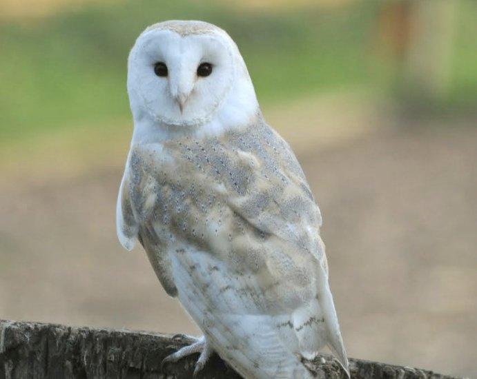 Devon Bird of Prey Centre Pricing